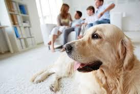 Какова опасность при дезинфекции для людей и домашних животных?