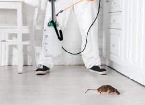 частная дератизация мышей и ее цены