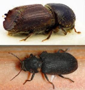 цена средства для борьбы с жуками короедами
