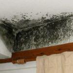 Борьба с плесенью и грибком - обработка стен квартир, домов