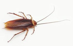 где купить эффективную отраву для домашних тараканов