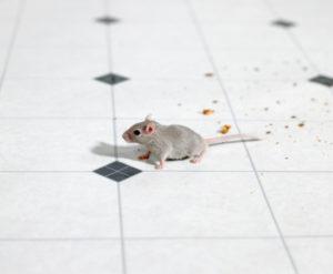 средства для борьбы и уничтожения мышей в квартирах