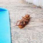 Тараканы в квартире - как избавиться раз и навсегда