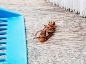 вывести тараканов средством уничтожения и дезинфекции