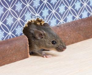 куда в подъезд или двор убегают крысы