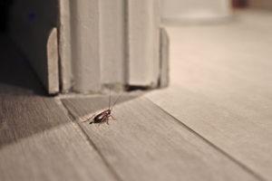 сэс травля насекомыз в квартире и отзывы