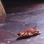 Уничтожение тараканов в квартире - гарантии, цены, отзывы