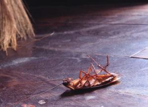 отзывы о службе уничтожения паразитов и клопов с гарантией в екатеринбурге